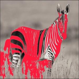 La Zebra, lo spietato mostro bianconero