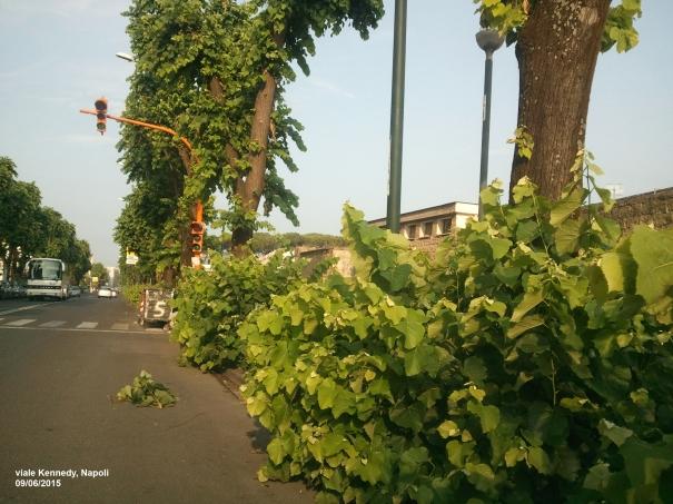 Napoli, l'amore per il verde o assenza di manutenzione?