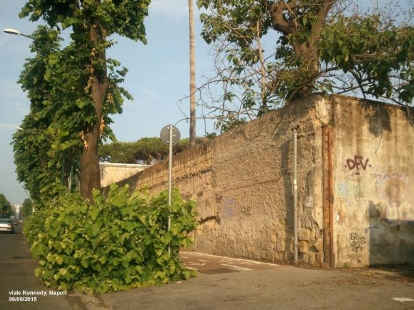 Napoli, l'ingresso della prima pista ciclabile a viale Kennedy invaso dal verde incontrollato