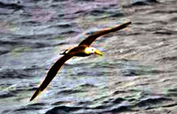 Lo spirito dell'albatros