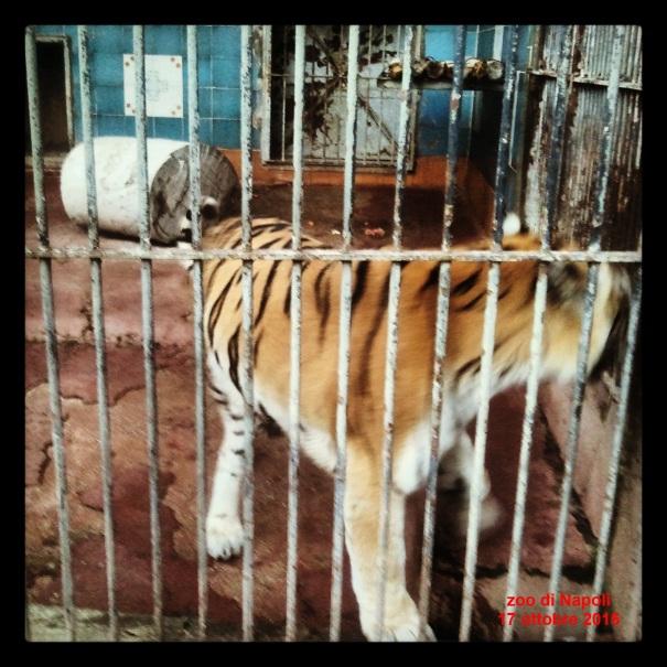 Zoo, il carcere di Kashmir, Valentina e Kira
